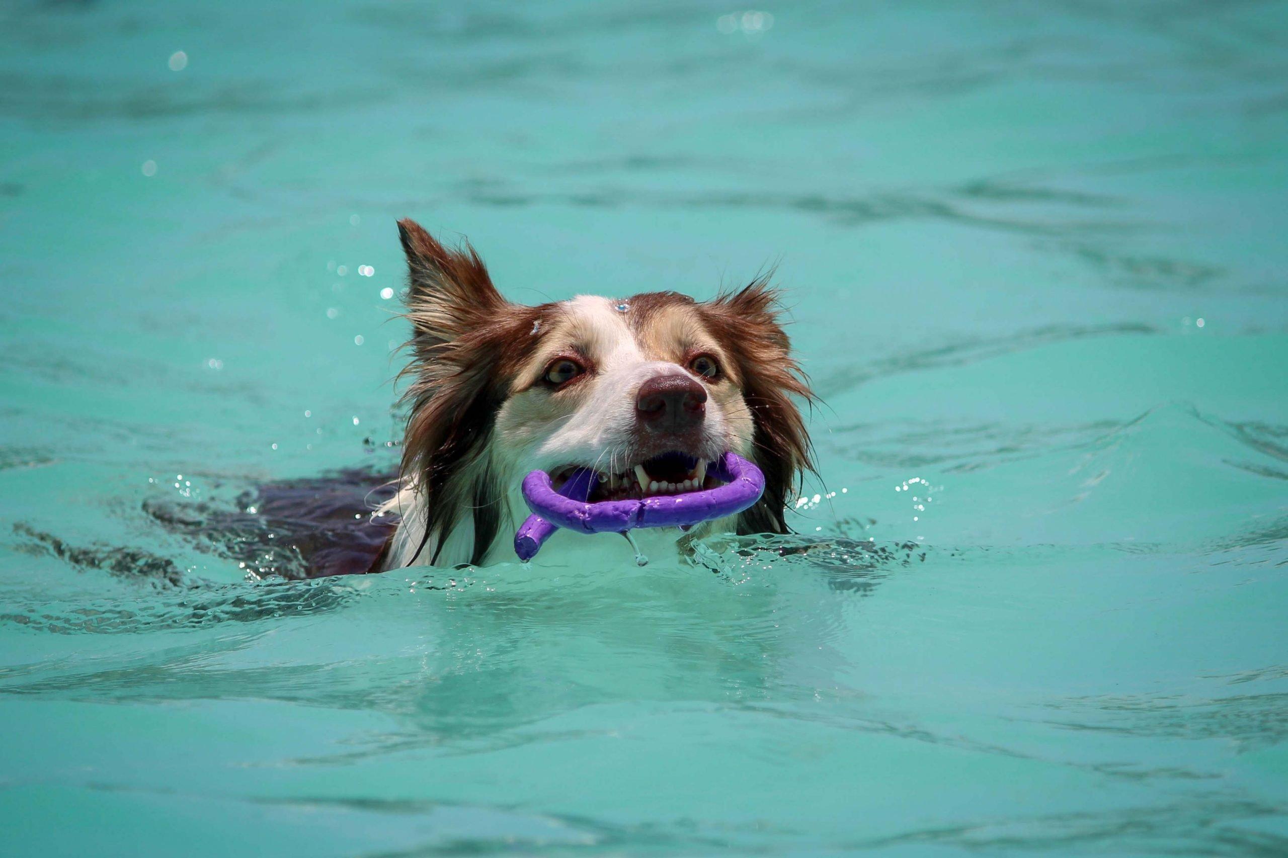 Dog swimming in Turtle Creek Pool